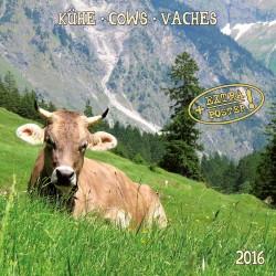 Kalendarz 2016: krowy