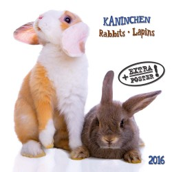 Kalendarz 2016: króliki